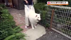 fukasawa_190625_3