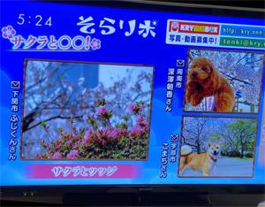 fukasawa_200415_1
