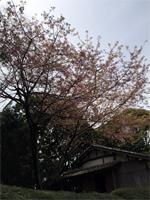 takamatsu_160325_1
