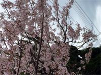 takamatsu_160404