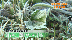 yamamoto_141226_3