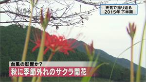 yamamoto_151225_10