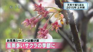 yamamoto_151225_4