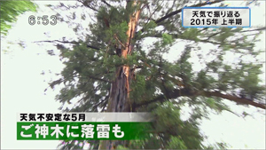yamamoto_151225_5